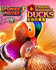 Power Prizes Eternal Mandarin Ducks