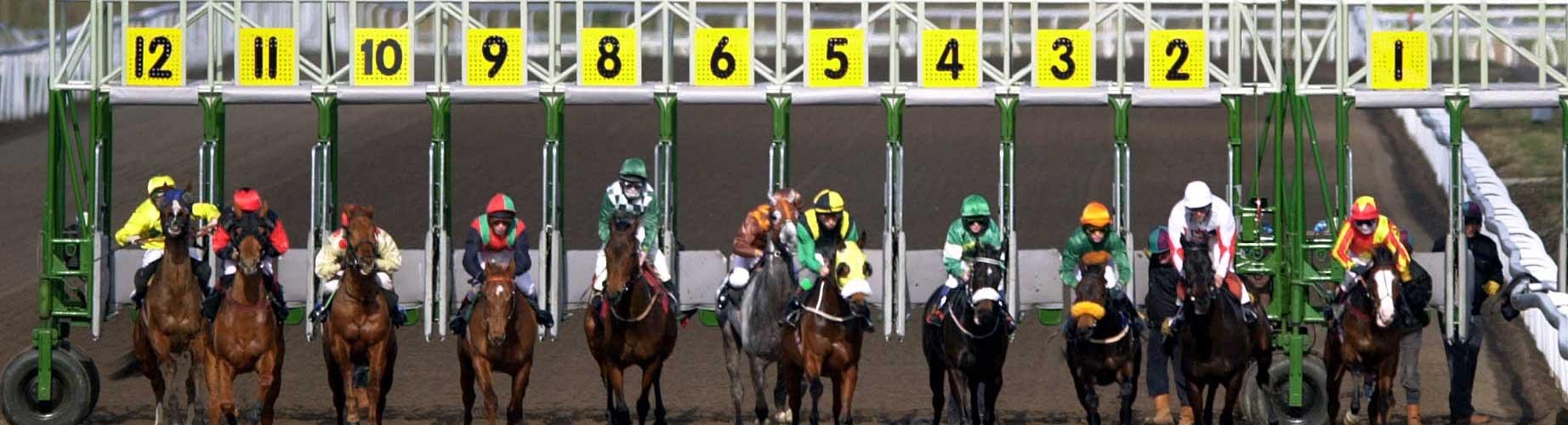 How do u bet on horse racing betting skins csgo lounge betting